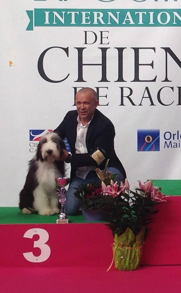 Millésime de Chester BIS 3 puppy Orléans