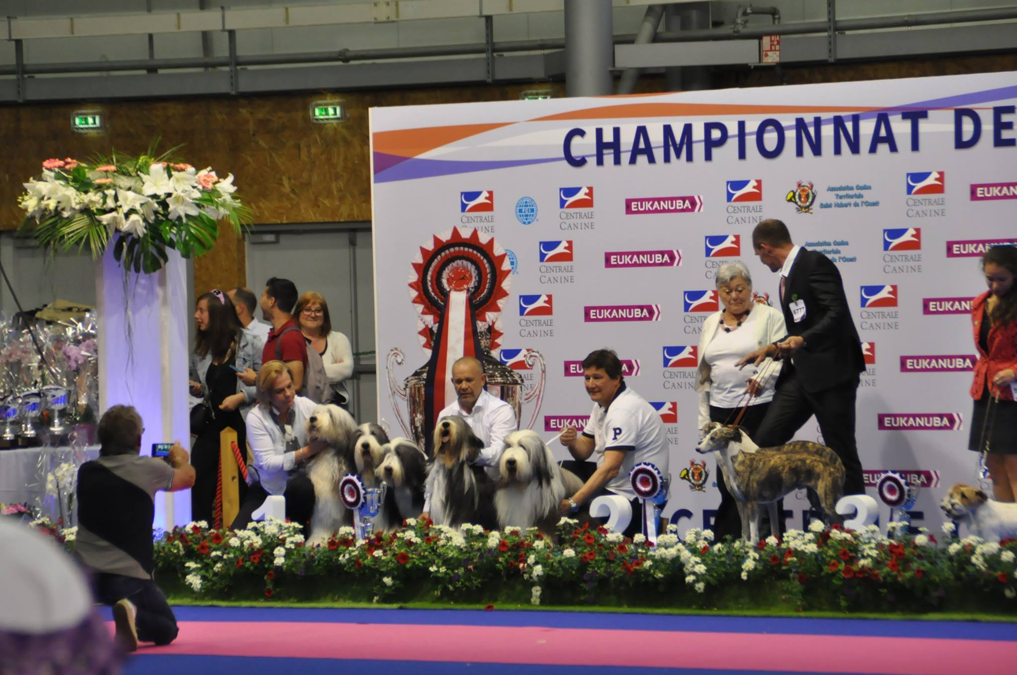 Bearded Collie DE CHESTER meilleur lot d'élevage Championnat de France